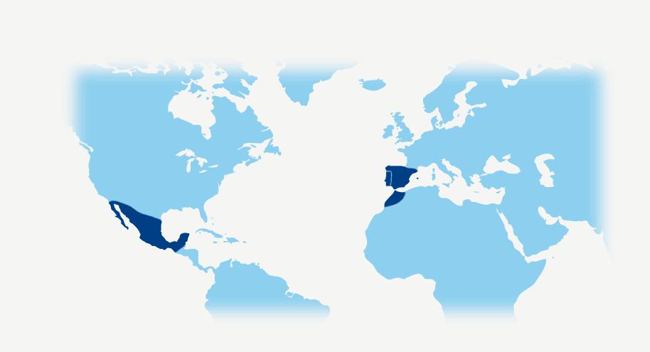 big-map