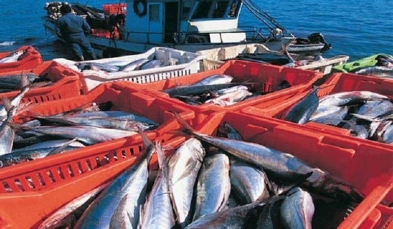 Sanitary Certificate to import fishery products